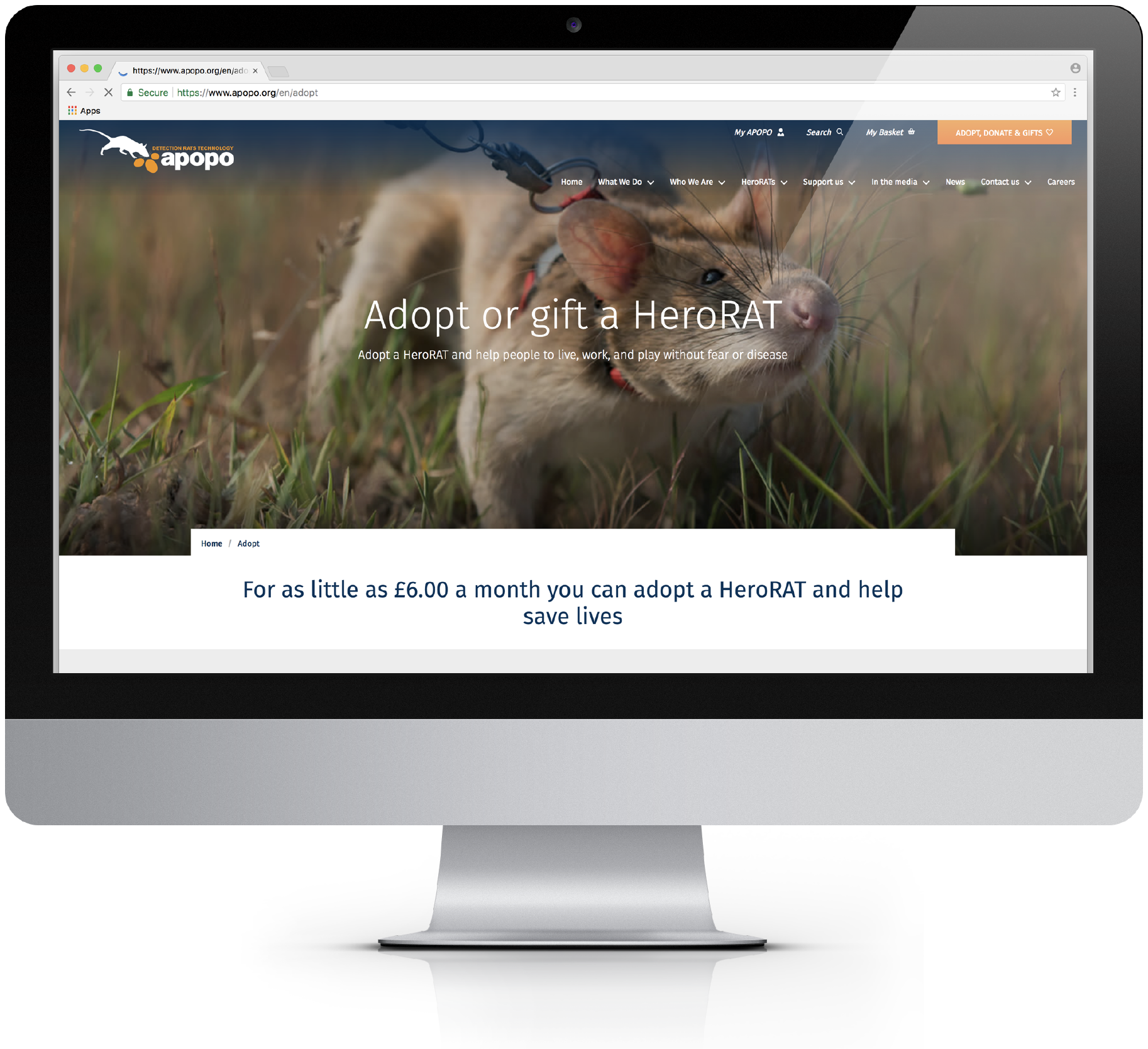 APOPO Mobile Website Design